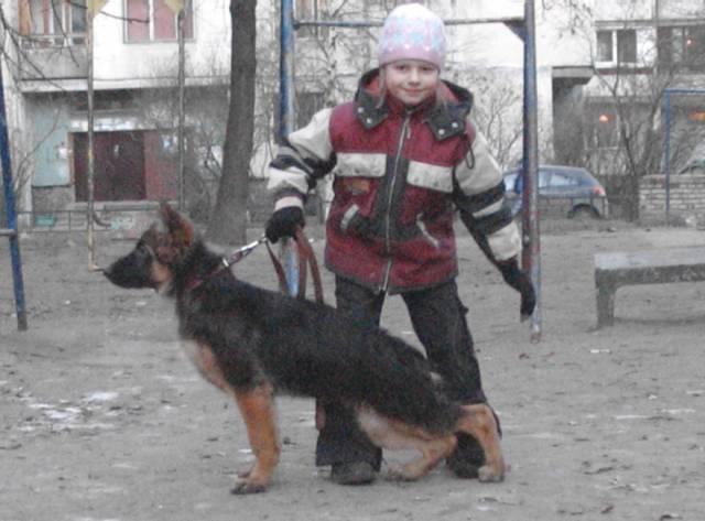 немецкая овчарка Джина - 4 мес. 1_
